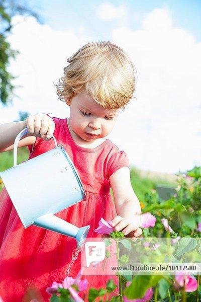 Weibliches Kleinkind  das rosa Blumen im Blumenfeld gießt.