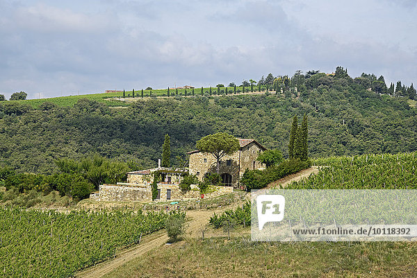 Landhaus  Weinanbau  Radda in Chianti  Provinz Siena  Toskana  Italien  Europa