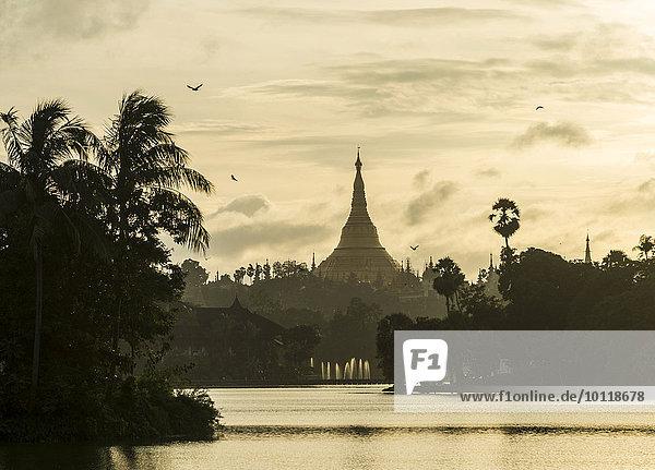Golden stupa at sunset  chedi  Shwedagon Pagoda  Kandawgyi Lake  Kandawgyi Nature Park  Yangon or Rangoon  Yangon Region  Myanmar  Asia