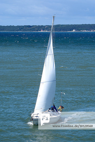 Segelboot am Öresund  Dänemark  Europa