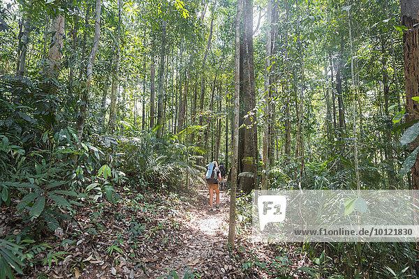 Wanderin  junge Frau läuft auf einem Trampelpfad im Dschungel  Kuala Tahan  Nationalpark Taman Negara  Malaysia  Asien