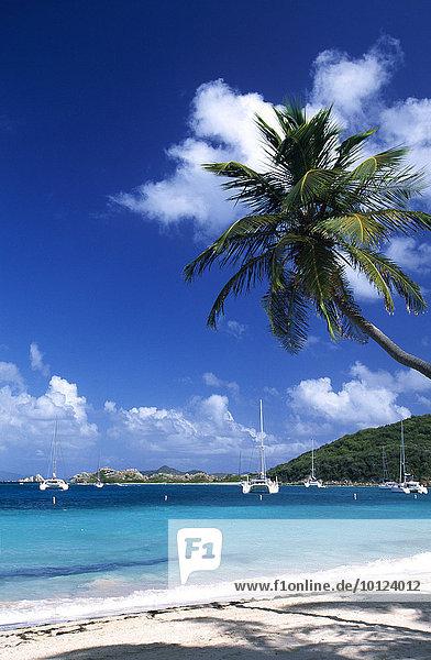 Palmenstrand auf Peter Island  Britische Jungferninseln  Karibik  Nordamerika