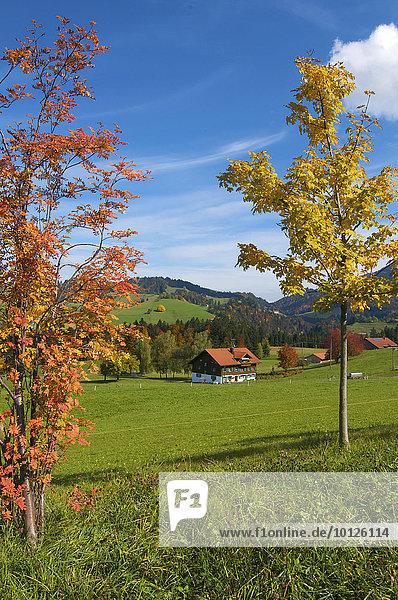 Bauernhof bei Oberstaufen  Allgäu  Bayern  Deutschland  Europa