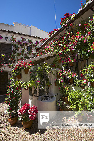 Blumengeschmückter Innenhof während der Fiesta de los Patios  Cordoba  Andalusien  Spanien  Europa