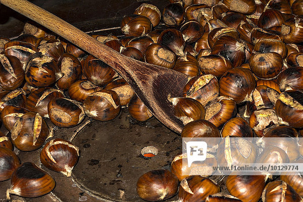 Chestnuts (Castanea sativa) being cooked on hot plate  South Tyrol  Italy  Europe