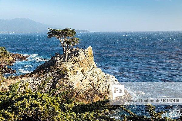 Vereinigte Staaten von Amerika USA Baum fahren Einsamkeit Kalifornien