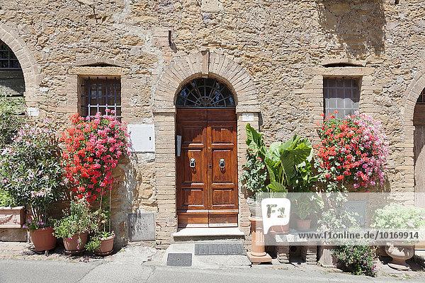 Blumengeschmücktes Haus  Montisi  Toskana  Provinz Siena  Italien  Europa