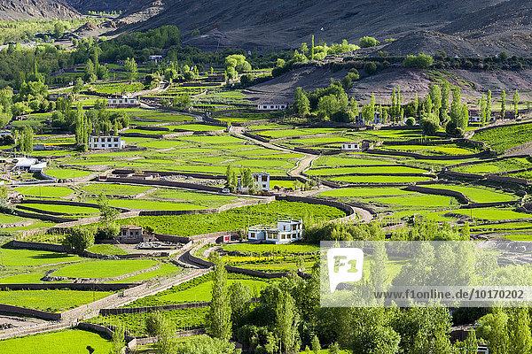 Luftaufnahme von grünen Feldern und Bauernhäusern in einem kleinen Tal hoch über dem Indus-Tal  Matho  Jammu und Kaschmir  Indien  Asien