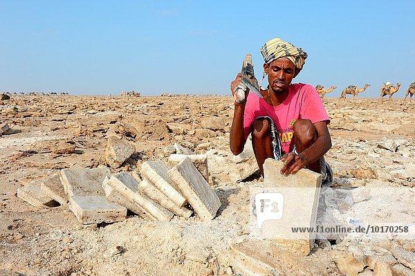 schneiden See 5 Bergwerk Grube Gruben Rechteck Afar-Dreieck Afrika Äthiopien Speisesalz Salz