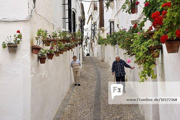 Storchschnäbel Wand Blume gehen vorwärts alt gekalkt Spanien
