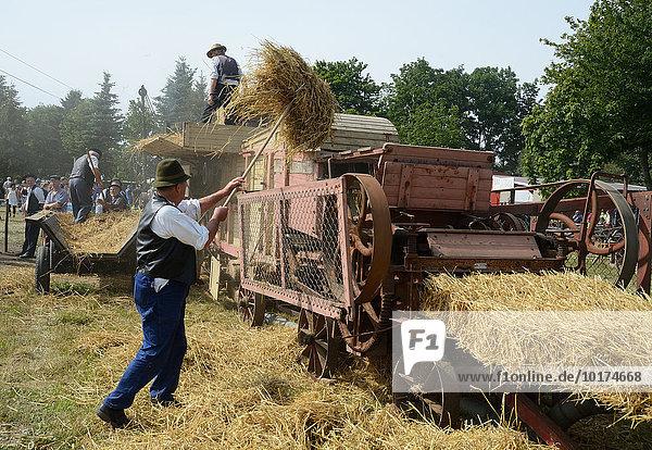 Arbeit mit einer alten Dreschmaschine  historisches Erntefest  Svenstorp  Skåne län  Schweden  Europa