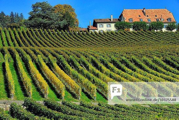 Europa Schweiz Kanton Waadt