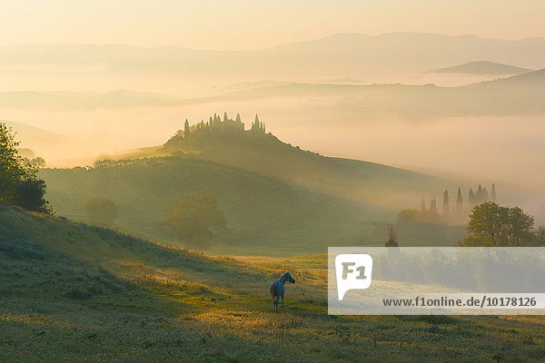 Podere Belvedere  Bauernhaus  Blick auf das Orcia-Tal  Sonnenaufgang im Nebel  San Quirico d'Orcia  Orcia-Tal  Toskana  Italien  Europa