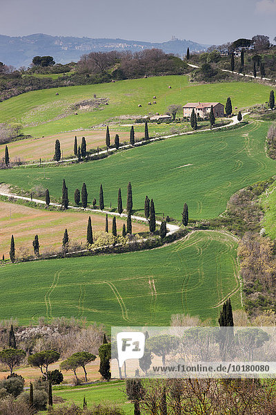 Cypress avenue La Foce  Tuscany  Italy  Europe