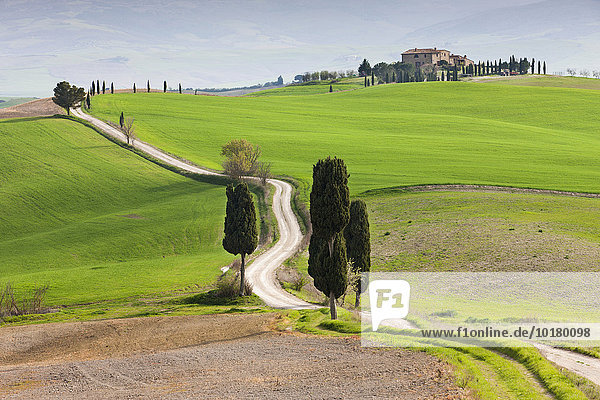 Tuscan landscape with cypress trees along a country lane  in Pienza  Val d'Orcia  Tuscany  Province of Siena  Italy  Europe