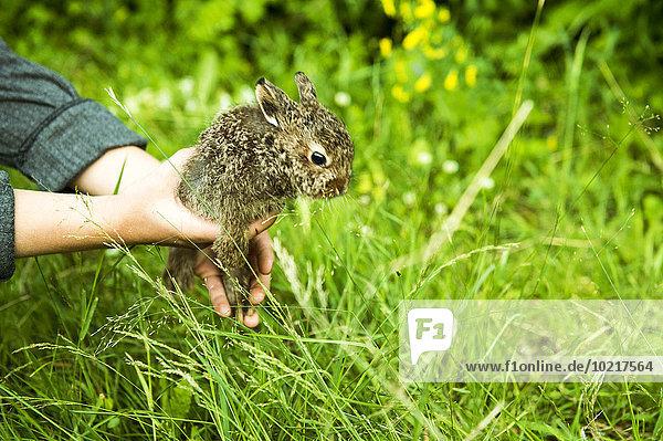 Europäer halten Garten Bauer Kaninchen
