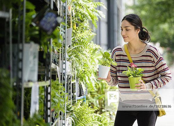 Frau Hispanier Pflanze kaufen