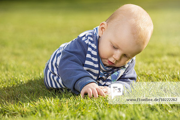 Baby boy lying on a meadow exploring the grass
