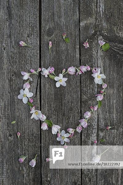 Apfelblüten auf verwittertem Holz  Herz