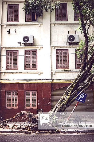 Vietnam  Hanoi  umgestürzter Baum auf der Straße nach dem Taifun