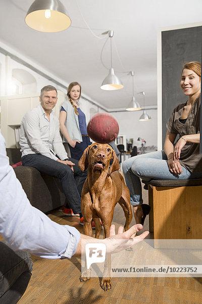 Kollegen spielen mit Hund im Büro