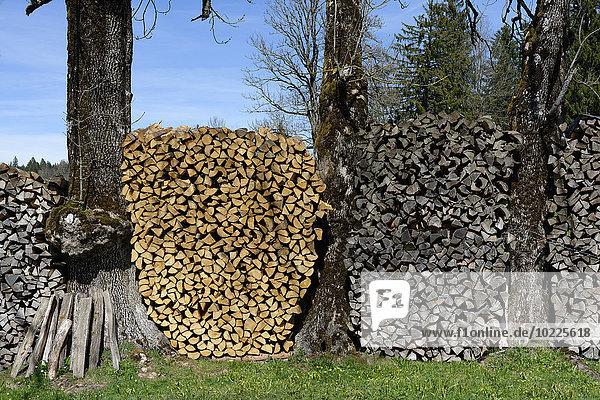 Deutschland  Bayern  Gestapeltes Brennholz zwischen Baumstämmen
