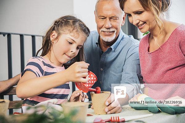 Drei Generationen Familiengärtnerei auf dem Balkon