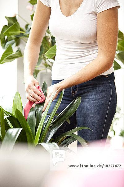 Frau wischt Blätter einer Pflanze ab