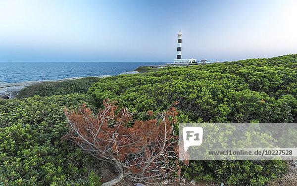 Spanien  Balearen  Menorca  Blick auf den Leuchtturm am Cap d'Artrutx