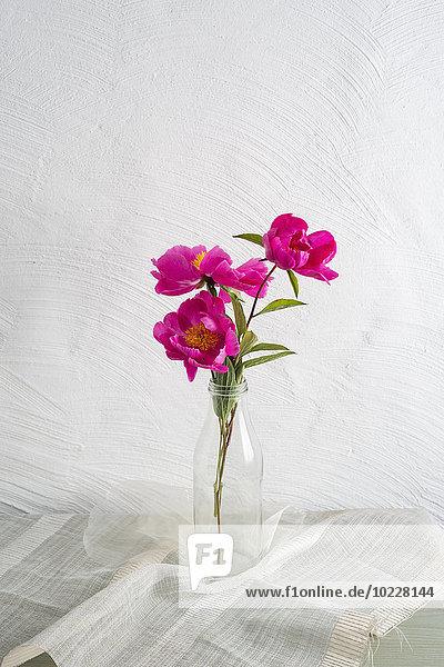 Rosa Pfingstrosen in einer Glasflasche