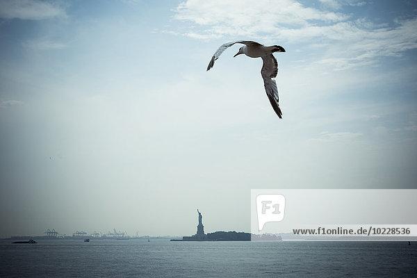 USA  New York City  Möwe am Himmel mit Freiheitsstatue im Hintergrund USA, New York City, Möwe am Himmel mit Freiheitsstatue im Hintergrund