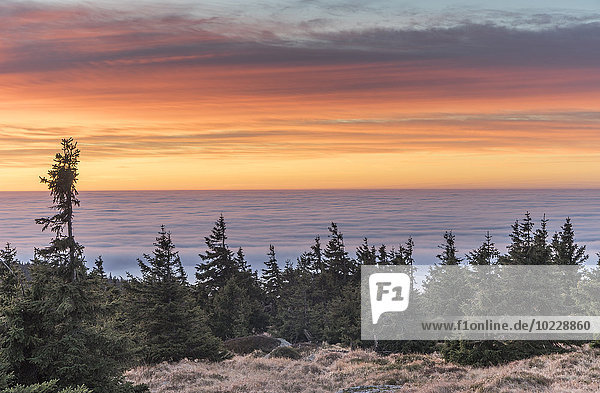 Deutschland,  Sachsen-Anhalt,  Nationalpark Harz,  atmosphärische Inversion am Brocken am Vormittag