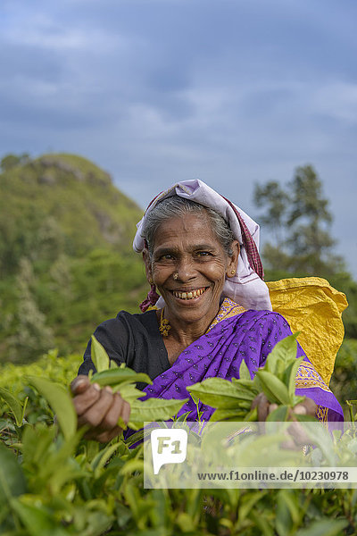 Sri Lanka  Lächelnde Frau beim Tee pflücken