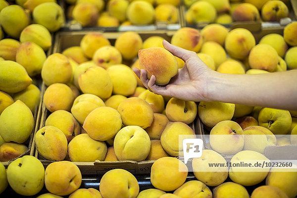 Handpflücken von Pfirsichen am Obststand