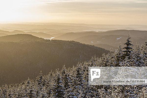Deutschland  Sachsen-Anhalt  Nationalpark Harz  Winterlandschaft bei Sonnenuntergang