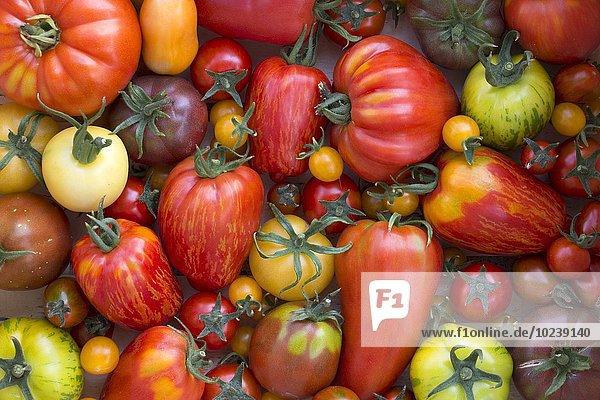 Verschiedene Heirloom Tomaten (Draufsicht)