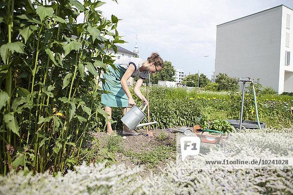 Frau arbeiten Gemüse Garten
