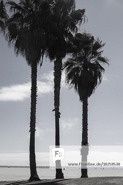 Palmen vor dem Meer gegen den Himmel