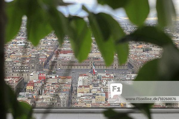 Hochwinkelansicht von The Zocalo durch die Blätter gesehen
