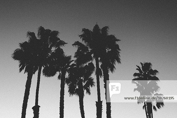 niedrig,durchsichtig,transparent,transparente,transparentes,Baum,Silhouette,Himmel,Ansicht,Flachwinkelansicht,Winkel,Abenddämmerung