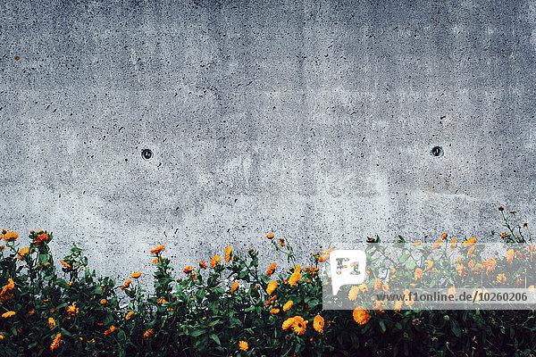 Blumen wachsen gegen die Wand