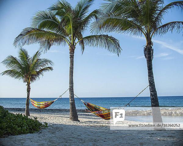 Hängematten an Palmen am Strand gegen den Himmel gebunden Hängematten an Palmen am Strand gegen den Himmel gebunden