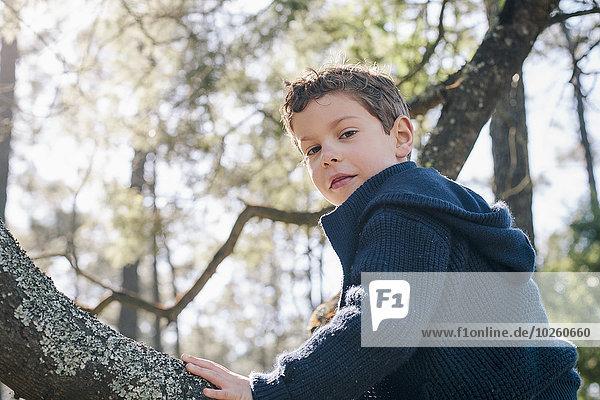 Niederwinkel-Porträt eines Jungen auf einem Baumstamm im Wald