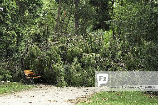 Gefallener Baum im Park