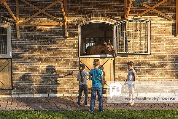 Kinder beobachten Pferd im Stall