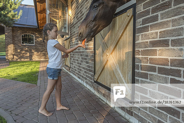 Seitenansicht des Mädchens beim Füttern von Karotte zu Pferd