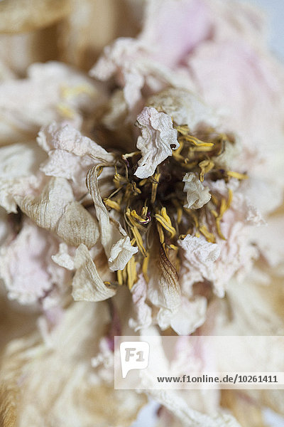 Blume,trocknen,Close-up,close-ups,close up,close ups