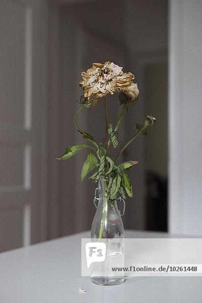 Getrocknete Blumen in der Vase zu Hause