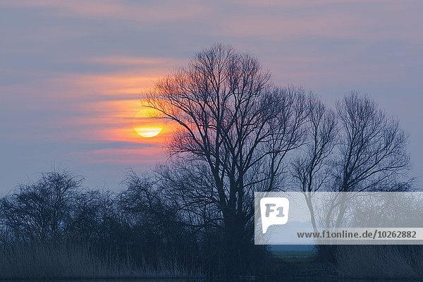 Baum Sonnenaufgang nackt Deutschland Hessen