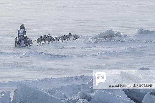 nahe rennen Hund Meer Schlitten